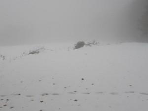 lokalita pro výsadbu je pod sněhem
